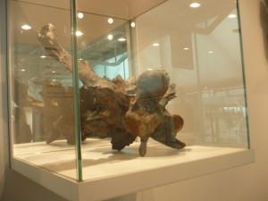 trozo de la columna vertebral del triceratops 2-7-2014