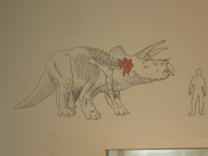 humano triceratops 2-7-2014
