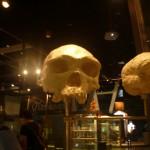 cráneo mono cráneo persona 2-7-2014