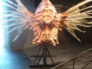 peix super raro 17-7-2014