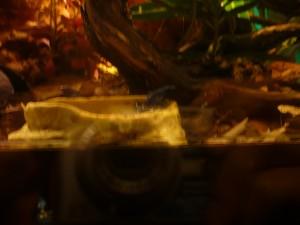 granota blaba amb punts negres 17-7-2014